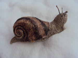 Un escargot qui ne finira pas dans l'assiette