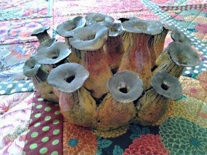 Groupe de champignons de culture... revisités